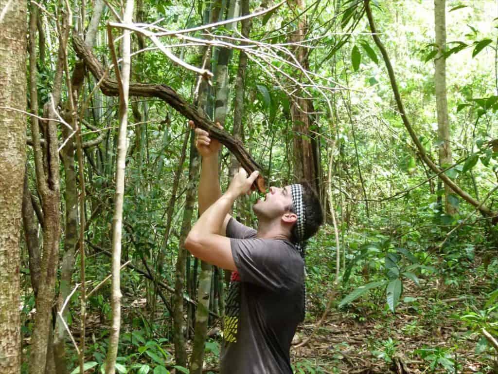 decouverte des plantes medicinales pendant un trek a Chiang Mai