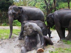Le bien etre des elephants durant les treks