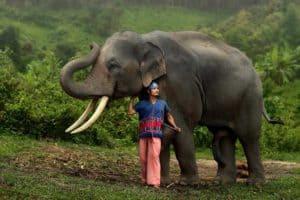Elephant avec membre tribu karen