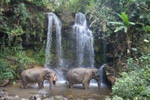 Éléphants dans une cascade
