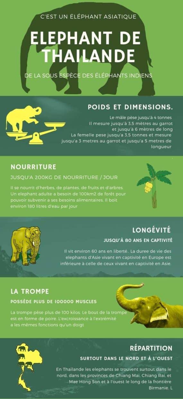 Infographie elephants Thailande