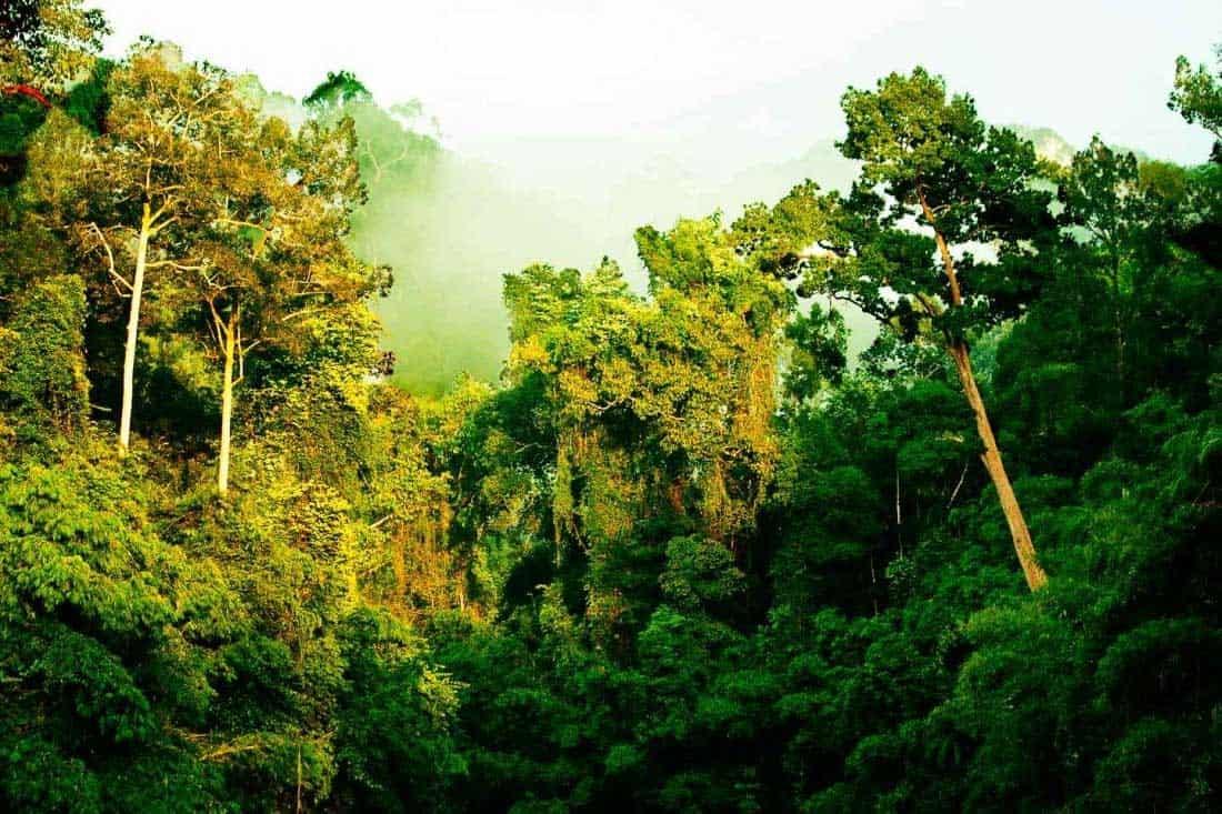 Jungle magnifique, trek durant la saison des pluies