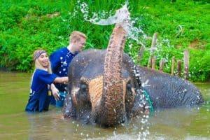 se baigner avec un éléphant a Chiang Mai