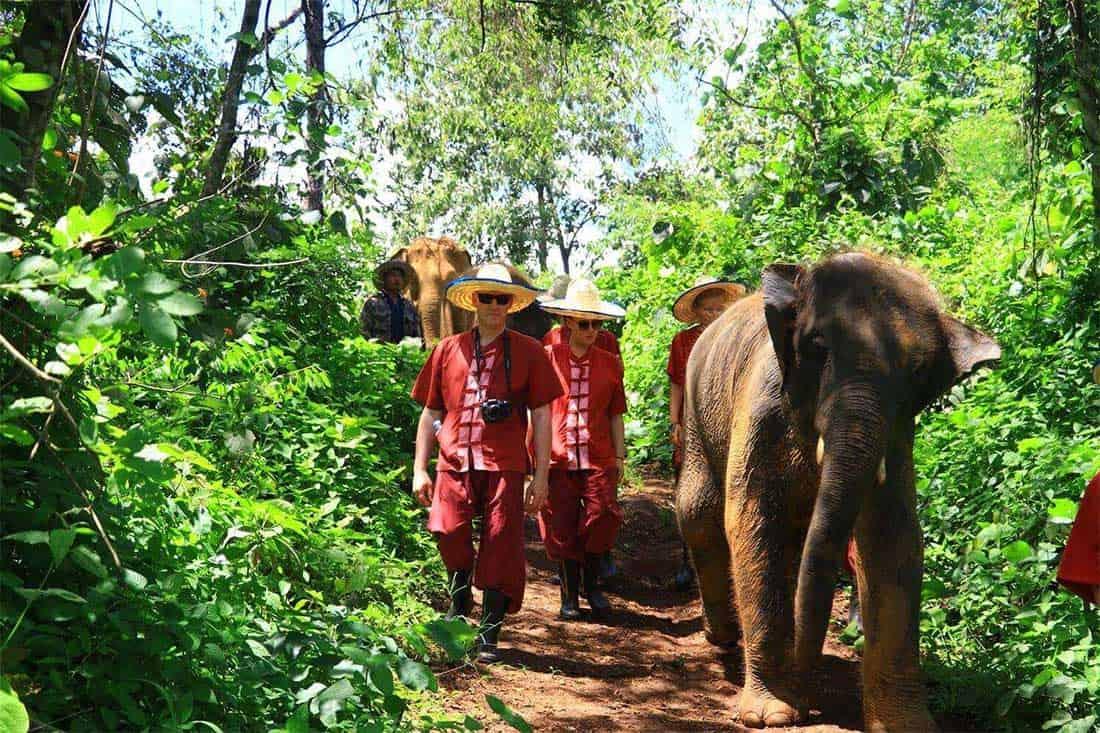 Marche avec les elephants dans la jungle