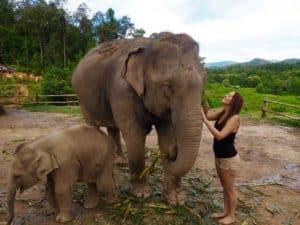 Visiter le Chiang Mai Elephant Sanctuary