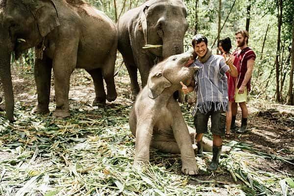 Faut il faire un trek avec les elephants a Chiang Mai